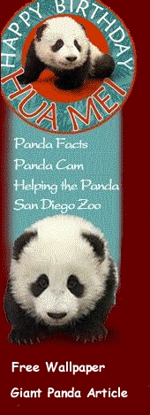 From Limelight to Sunlight: Panda Cub now on Exhibit at